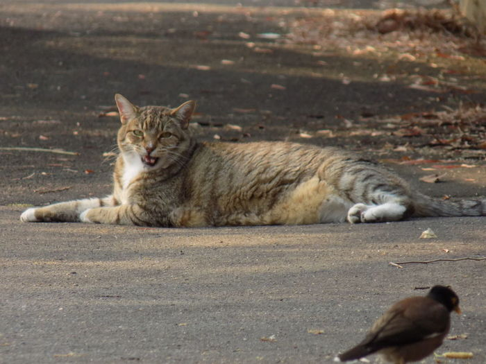 Cat resting on street in city