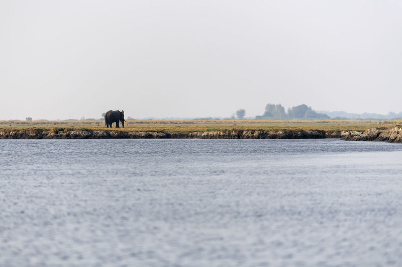 View of an elephant in a lake