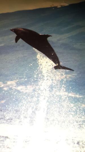 Jump Yunus Okyanus Deniz Tatil Jump