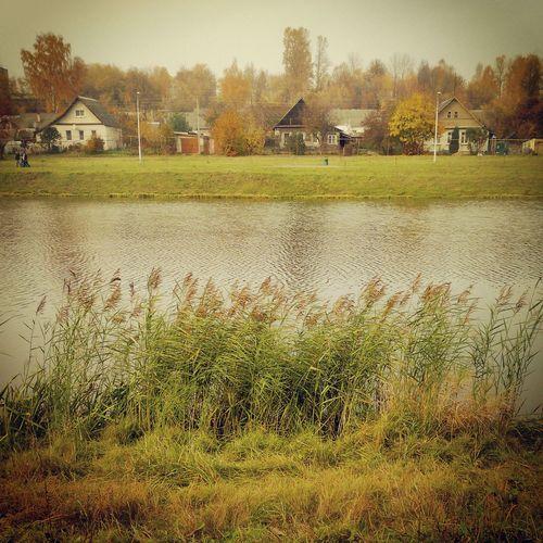 Камыши над рекой Прогулка в парке Золотая осень
