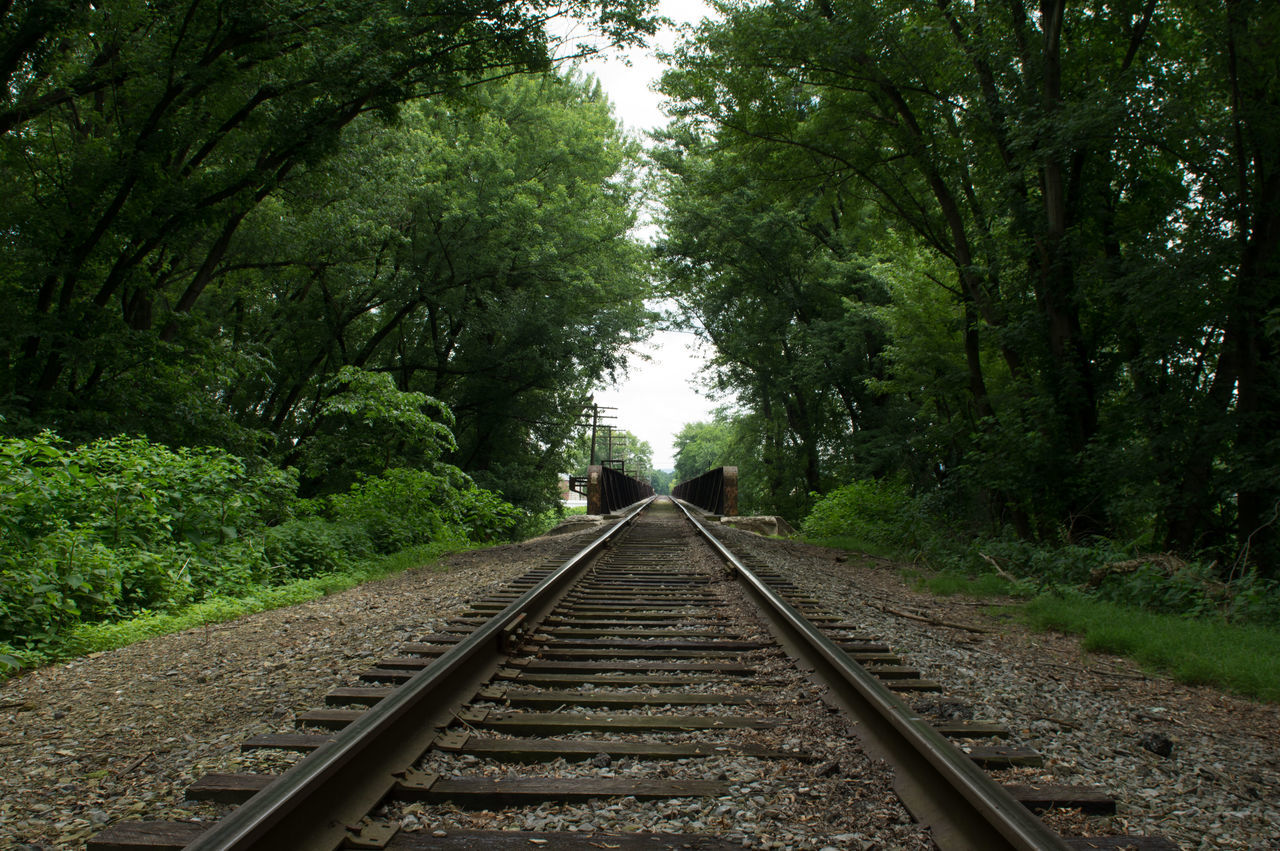 Railroad Tracks Amidst Trees
