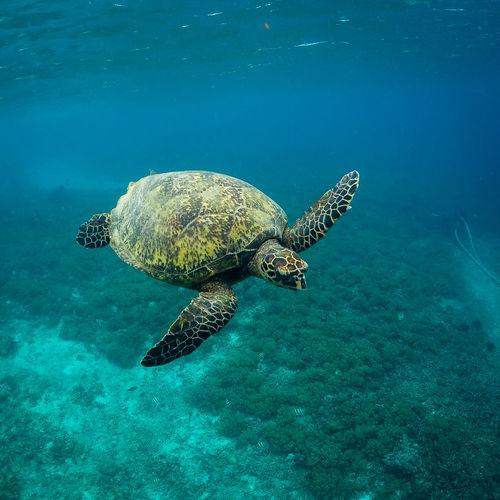 Sea Turtle in