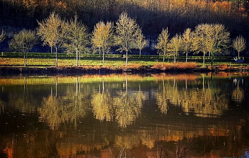 Reflection Water Outdoors No People Tree Nature Close-up Blurry Blurred Symmetry Mosel Mosel View Reflection Autumn