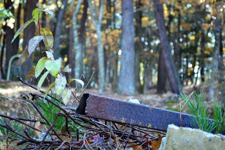 Autumn Iwate Nature No People Outdoors Tohno(遠野) 岩手 秋