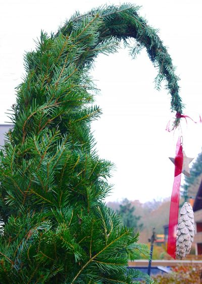 Christmas Tree Day Fir Green Heavy Decorations Nature No People Outdoors Sky Statue Tree