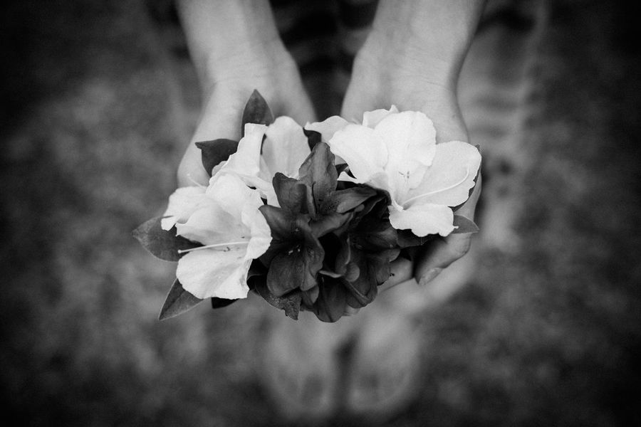 Flowers Blackandwhite Shallow Depth Of Field Spring