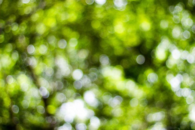 so much green