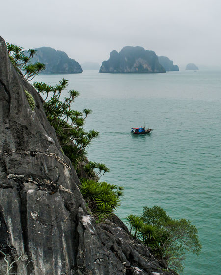 Ha Long Bay Boat Seascape Sea Nautical Vessel Transportation Beauty In Nature Frog Island Tree Rock Outdoors Rock - Object Tranquility Scenics - Nature Water Mountain