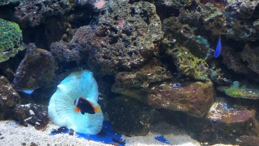 Zoo Fishes 🐠 Natureisbeatiful Water