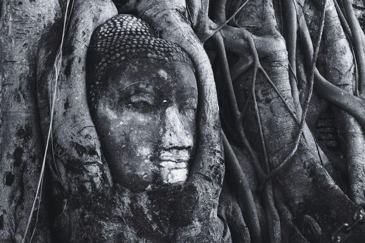 The Head Of Buddha Temple Ayutthaya Travel Thailand Unseen Thailand Buddha