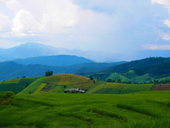 Ricefield Step Rice Field Chiang Mai   Thailand Thailand Green Nature Inthanon Ban Pa Bong Pieng