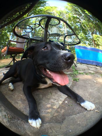 Cute Smiling dog selfie fisheye lens Smiling Selfıe Dog Selfie Cute Dog Pets Mammal Animal Themes Domestic Animals One Animal Day No People Panting Outdoors