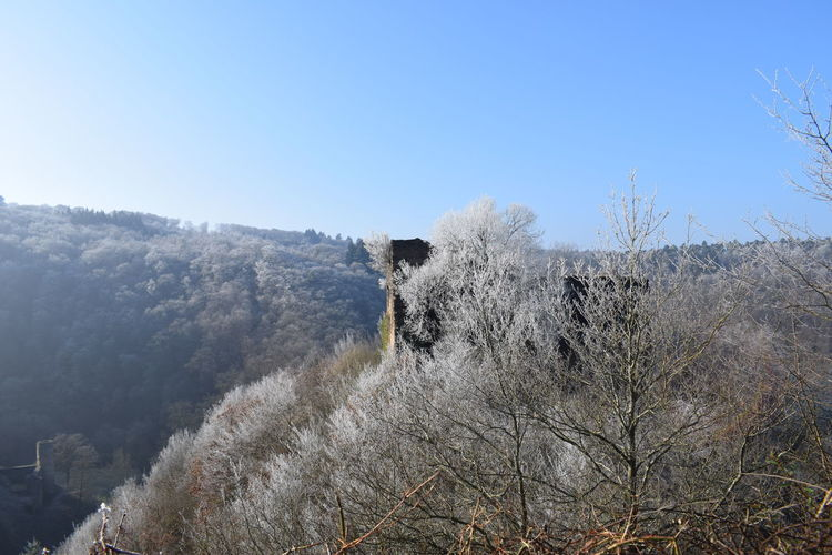 Frosty forrest #frosty #morning Forrest Photography Cold Days Clear Sky Sky Blooming