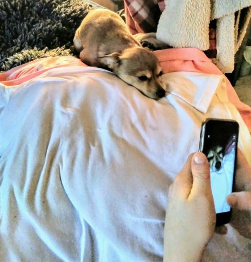 Photo Within A Photo EyeEm Best Shots Eye'em Pets Pets Domestic Animals One Animal Mammal Animal Themes Dog