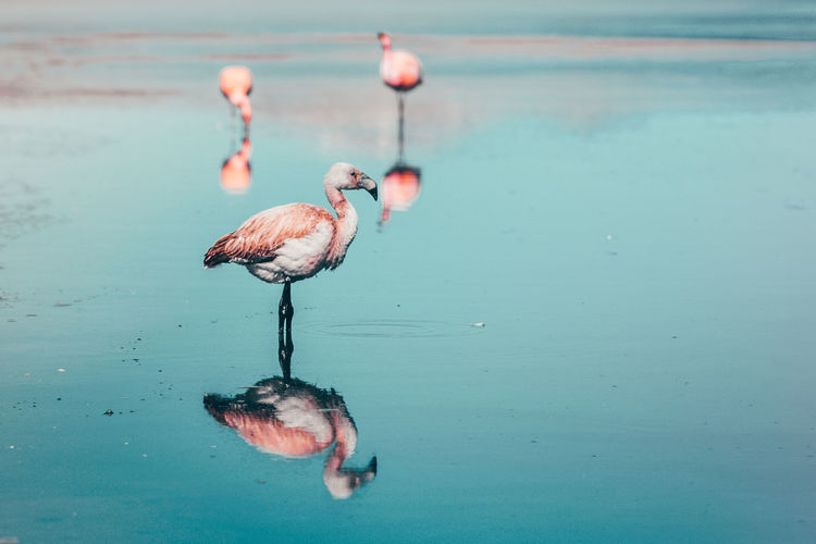Check This Out EyeEm Nature Lover Flamingo Nature Nature Photography Abstract Animal Animal Themes Animal Wildlife Animals In The Wild Beauty In Nature Bird Day Lake Nature No People Outdoors Reflection Water