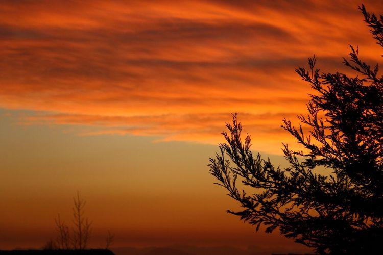 Céu em chamas... Sunset Nature Beauty In Nature Cielo Y Nubes  Sky céu Orange Color cielo Nofilter Cielo Céu Nuvens Nubles Naturaleza Chile Santiago De Chile Red Color View Tree Arboles Otoño Outono Vermelho Semfiltro Sinfiltros Llamas In Sunset Arvore First Eyeem Photo