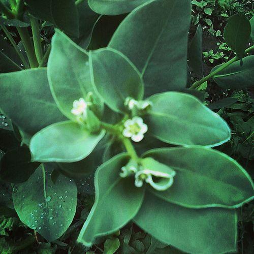 зелень  цветы Природа листва_после_дождя листва листья дождь_на_листьях цветочек Rain Summer Nature Leaves лето