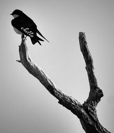 Found a chillo bird today Sony A6000 Blackandwhite Blackandwhite Photography Monochrome EyeEm Nature Lover Eye4photography  EyeEm Best Shots The Purist (no Edit, No Filter) Streetphotography Photography