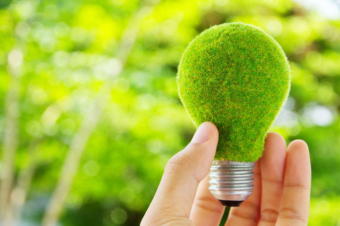 hand holding eco light bulb energy concept Earth Hour Eco Green Green Color Close-up Day Eco Energy Energy Freshness Green Color Green Light Bulb Holding Human Body Part Human Hand Light Bulb Nature Outdoors Power And Energy Save Energy Sweet Food Tree