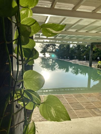 Reflection of leaves on swimming pool in lake