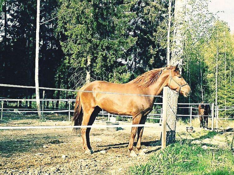 (c) TP | Horse Horses Animal