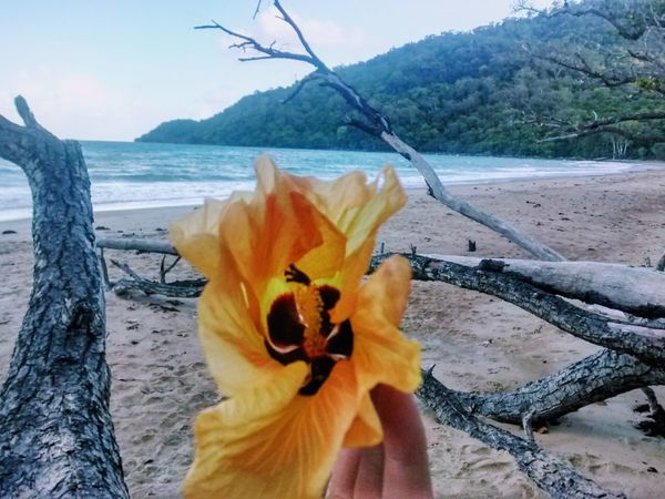 Australia Beach Beauty In Nature Branches Close-up Day Flower Flower Head Fragility Freshness Hibiscus Hibiscus Flower Nature No People Outdoors Queensland Sea Sky Travel Vacation Water