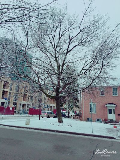 Bare tree in city during winter