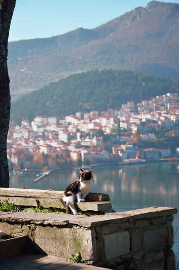 Kitty fall asleep up to the hill in kastoria ,with the view of the town  as background