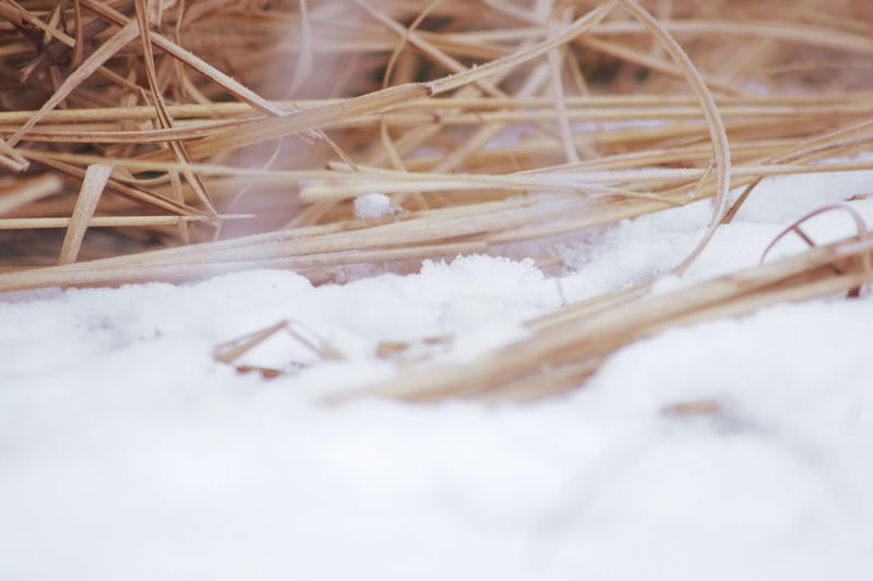 Close-up Close-up Of Hay Close-up Of Hay And Snow Cold Temperature Country Life Hay Hay And Snow Hay In The Snow Hay In The Winter No People Outdoors Snow Snowy Day Snowy Hay White Color Winter Winter Hay Wintery Day Winter Atmosphere Winter Feeling Winter And Snow Snowy Days Wintertime Winter Feelings