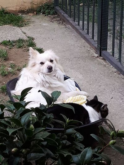 Dog❤ Cat Lovers Pets Dog Sitting