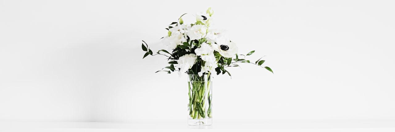 Close-up of vase on white background