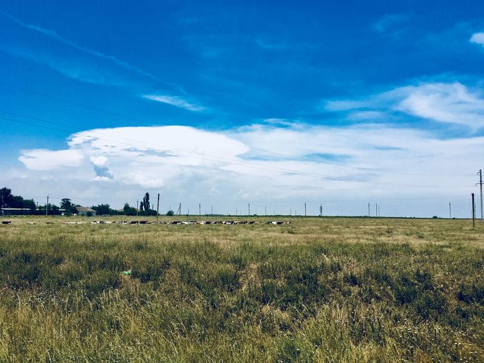 Goats Sky Plant Land Cloud - Sky Landscape Environment Scenics - Nature Tranquil Scene Beauty In Nature Growth Agriculture Day No People Rural Scene Field Tranquility Nature Blue Grass Sunlight