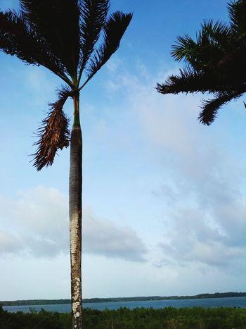 Cuiarana e sua beleza exuberante. Paradise Brasil Para Beach Tree Sky Day Animal Wildlife No People Outdoors Nature Beauty In Nature Bird Animal Themes
