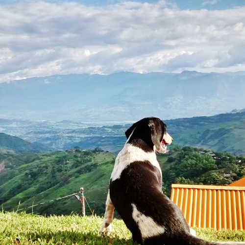 Dog with mountain in background
