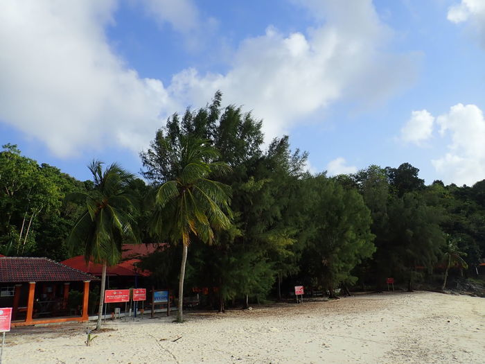 Trees and plants on beach against sky