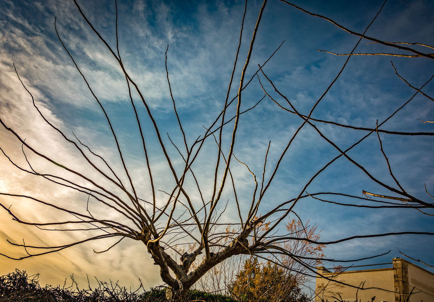 Architecture Bare Tree Beauty In Nature Blue Branch Built Structure Cloud - Sky Day Growth Low Angle View Nature No People Outdoors Plant Scenics - Nature Sky Sunset Tranquil Scene Tranquility Tree Wispy The Great Outdoors - 2018 EyeEm Awards