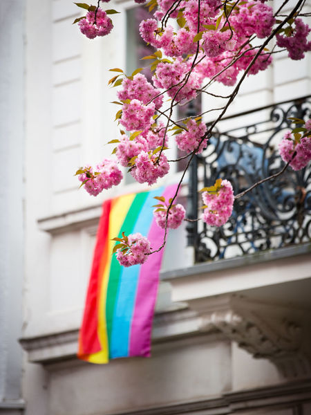 Pink Color Plant Flower Multi Colored Flowering Plant No People Hanging Architecture Focus On Foreground Built Structure Day Fragility Nature Freshness Building Exterior Low Angle View Close-up Outdoors Building Cherry Blossom Rainbow Flag Rainbow Colors Homosexual Love Positive Emotion Symbolism