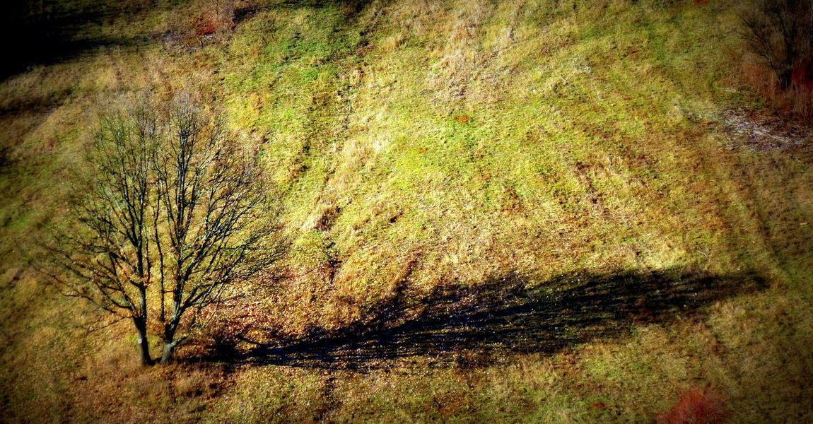 Tree Onetree Tree And Shadow Field Landscape_Collection Nature_collection Nature Photography Naturelovers High Angle View Sunlight Shadow Outdoors Nature