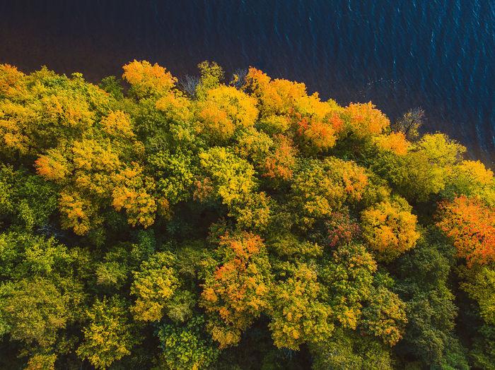 Autumn Colors Aerial Shot Autumn Colors Drone  Kaunas Lagoon Lietuva Forest Forest Photography Kaunas Sea Mavic Mavic Pro Sea Top Down View Perspectives On Nature