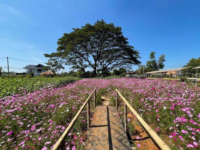 Pink flowering plants by trees in park against sky