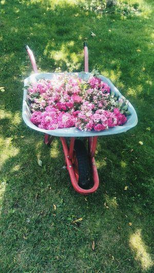 цветы тележка декор красиво