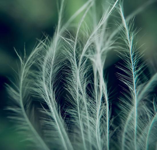 Full frame shot of crops