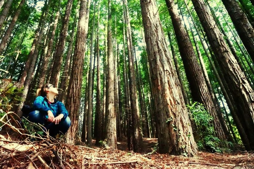 Tree Forest Tree Trunk Full Length Bamboo - Plant Sitting Branch Bamboo Grove WoodLand