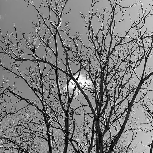 Low Angle View Plant Tree Sky Branch No People Nature Beauty In Nature Growth Day Bare Tree Tranquility Leaf Outdoors Clear Sky Silhouette Close-up Plant Part Vulnerability  Fragility