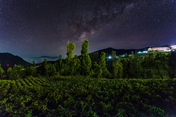Plants Growing On Field Against Sky At Night