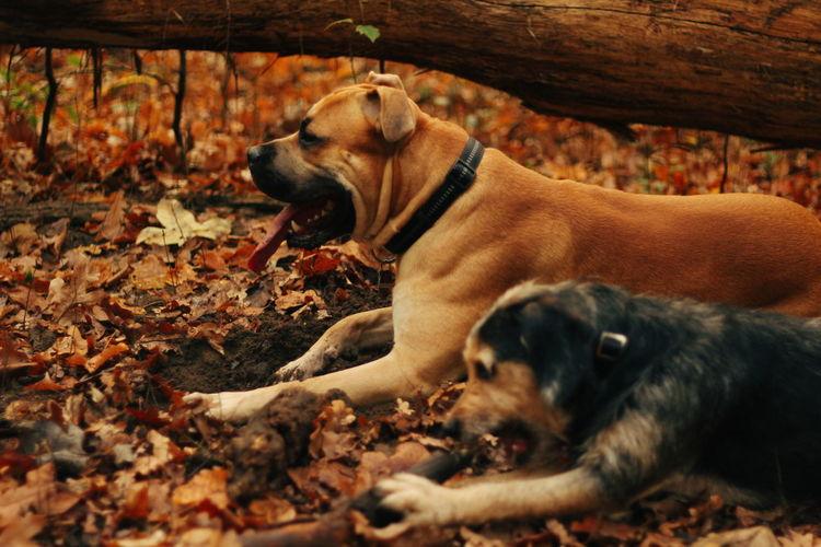 Pets Dog Autumn