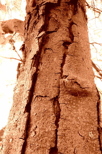 Depth of a tree. Tree Trunk Tree Textured  Growth Bark Close-up Rough Nature Brown Outdoors Beauty In Nature Natural Condition No People Beautyisallaroundus Nature Environment Naturephotography Depths Depth Of Beauty Trees Collection Trees Are Beautiful Trees! Trees