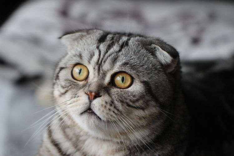 Close-up of cat looking away while sitting at home
