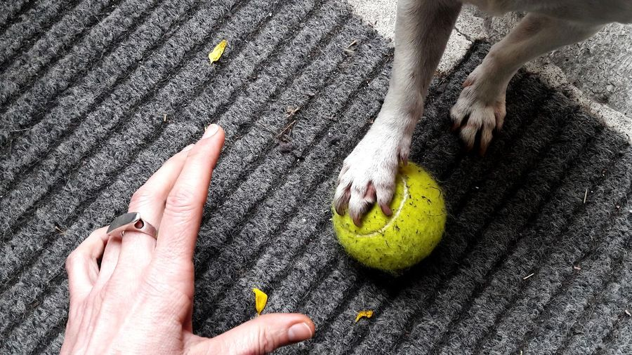 yellow ball Dog Dogs Of EyeEm Human Hand Low Section Nail Polish Sand Beach barefoot Childhood High Angle View Close-up Tennis Racket Tennis Personal Perspective