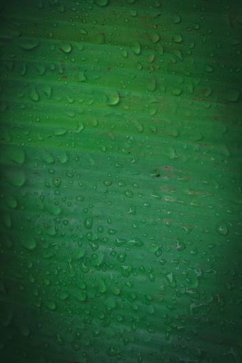 Full frame shot of raindrops on green leaf